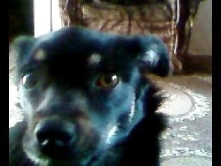 моя очаровательная собачка Соня))