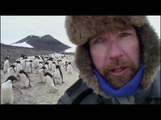 Четыре месяца с пингвинами ...