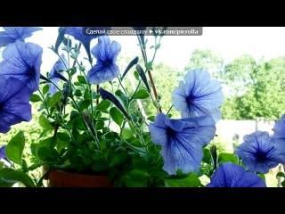 «Цветы у дома моего.» под музыку Михаил Боярский - Городские цветы (песня, конечно, старая... и, воможно, кто-то посмеется... но с ней у меня связаны очень хорошие воспоминания... один из самых лучших моментов в моей жизни...). Picrolla