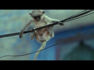 BBC: Живая природа. Ребятам о зверятах / BBC: All About Animals (Season 1, episode 2 из 6) (2006) DVDRip