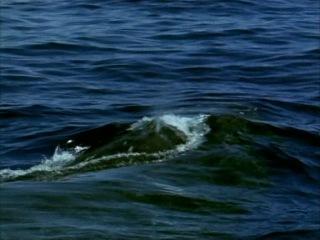 BBC: Эти загадочные киты (Тайны Морских глубин)