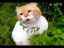 говорящая кошка 019