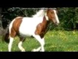 «мои лошадки и не только + я» под музыку Слезы асфальта feat Electra - Грустная песня ...девушка больна...ей нужна пересадка сердца...любовь способна воскресить...любите друг другу..берегите ... Picrolla
