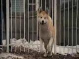 Хатико (Господи сколько слез я пролила на этом видео)