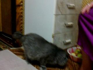 Бая и Муся, родительские коты, которых мы нашли на улице,вот такие вот красавцы))