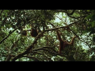 BBC: Живая природа. Ребятам о зверятах / BBC: All About Animals (Season 5, episode 5) (2006) DVDRip