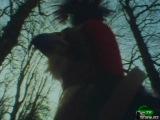 BBC: Мир природы. Итен. Древний лес