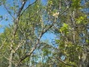 28 04 2012 Прибольничный лесо парк звуки природы