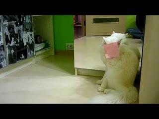 Кот vs стикера