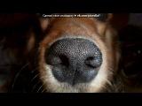 малыш)))) под музыку Krec ft. Ассаи - Собака. Picrolla