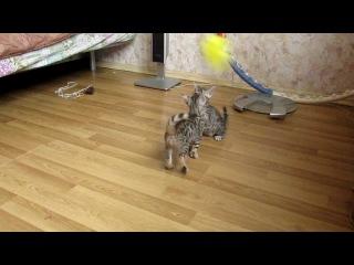 наши первые котята, 1,5 мес.