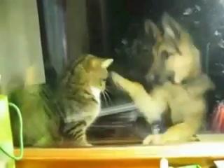 Dog vs Cat Box