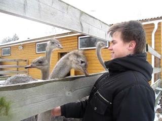 Поездка на страусиную ферму (третий ролик)