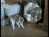 Приколи о кошках)