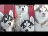 Наши собаки и щенки. под музыку Neon Trees - Animal ( саундтрек из Симс 3 Животные) . Picrolla