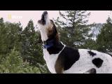 Nat Geo Wild America: Stalking the Mountain Lion