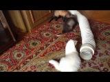 утро у хорят (Белый красивый альбинос но не важно играют в трубе)