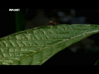 Войны жуков-гигантов. Серия 8