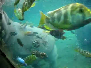 African fish tank, 20,000 gal with hippos