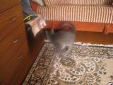 мой кот дурак =)