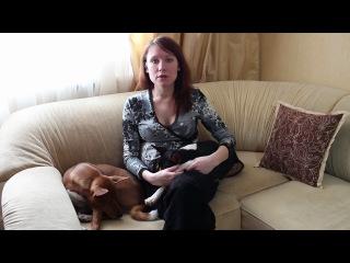 Как дрессировать щенка дома Говорит ЭКСПЕРТ.mp4