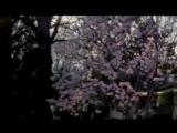 Ляля Рублева - Тополиный пух