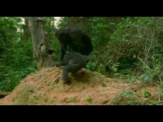 BBC: Живая природа. Ребятам о зверятах / BBC: All About Animals (Season 3, episode 2) (2006) DVDRip