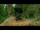 BBC Живая природа. Ребятам о зверятах / BBC All About Animals Season 3, episode 2 2006 DVDRip