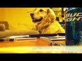 Собака, которая очень любит слушать музыку )