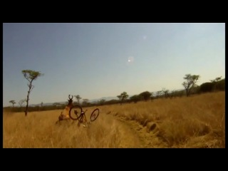 Велосипедист-неудачник
