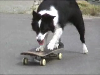 Дрессировка собак- Трюки хорошо обученной собаки