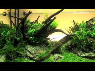 Aquascaping - The Art of the Planted Aquarium 2012 XL compilation (HD)