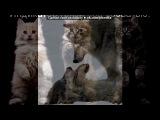 «ФотоМагия» под музыку Иван Кучин - Волк. Picrolla