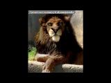«Персонажи входящие и не входящие в мультфильм» под музыку Король Лев 3 - Симба - I just can't wait to be king (OST The Lion King). Picrolla