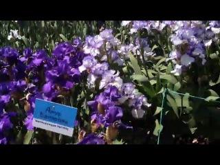 Карнавал ирисов в Никитском ботаническом саду. Май 2013.