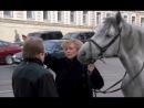 Год лошади - созвездие скорпиона (2004)
