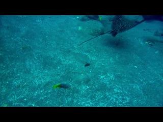 BBC Галапагосские острова часть3