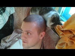 Кошка лижет голову