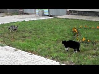 Собака против кота (Вестерн)