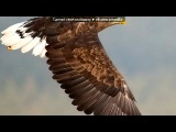 дикая природа под музыку Orinoko - Vila Nova (Oriney Yassaneiy) (Club Radio Mix). Picrolla