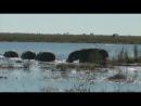 Золотой Глобус 89. Ботсвана. В сердце Африки (2011)