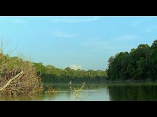 BBC: Живая природа. Ребятам о зверятах / BBC: All About Animals (Season 4, episode 1) (2006) DVDRip