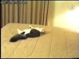 Резкий котик