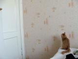 мой кот дурак