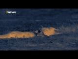 Ночные охотники. Крокодилы - http://on-lain.at.ua