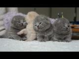 Кот,котик, котята, мило, мимими, до слёз, милота, уруру :)