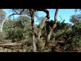 Мабуть Боги з'їхали з глузду II / Наверное Боги сошли с ума 2 / The Gods Must Be Crazy II (1989) DVDRip