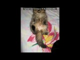 Коты и Идиотка =))) под музыку Детские песни - про кота!=)) vkhp.net - Песня СУПЕРРР смешная!!!!. Picrolla