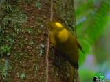 BBC: Мир природы (61 серия) - Искусство обольщения