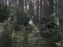 Военная разведка: Западный фронт - 4 серия (2010)